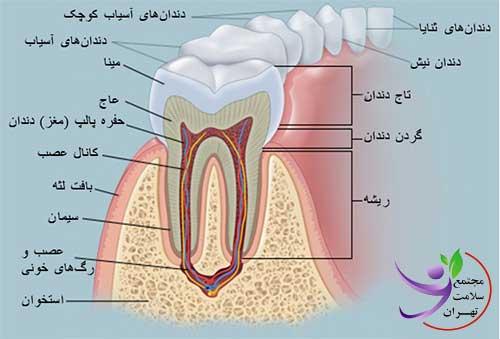 ساختمان دندان | مجتمع سلامت تهران