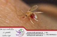 ایران یکی از ۷ کشور آلوده به سالک/۱۹ استان درگیر بیماری هستند
